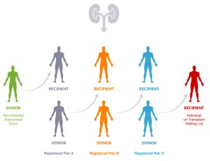 One diagram showing how an undesignated donor can make a difference in many lives.